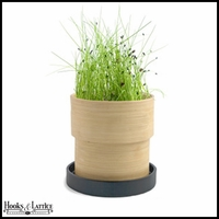 Chives Seed Kit in Bamboo Container