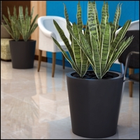 Contempo Tapered Round Planters