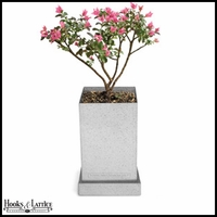 Crepe Myrtle Bonsai Box