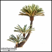 Curved King Cycas Tree 9'