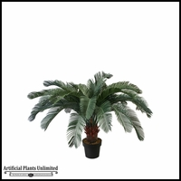 3.5' or 5' Cycas Palm