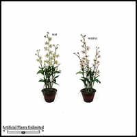 Dendrobium Orchid Plant 37in. (2 Colors)