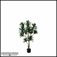 Dracaena Reflexa Tree (4 Sizes)