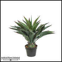 24in. Duraleaf Agave Macroacantha, Outdoor