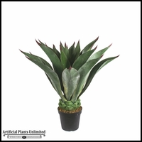 Duraleaf Agave Macroacantha 39in, Outdoor