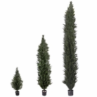 Duraleaf Cypress | Arborvitae, 5 Sizes Available, Outdoor