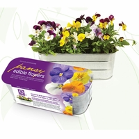 Edible Flower Kit - Pansy