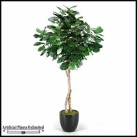 Fiddle Leaf Fig Tree in Round Glossy Black Resin, 6.5'