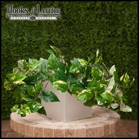 "Fire Retardant 20"" Pothos Bush"