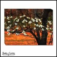 Flowering Dogwood Branches - Canvas Artwork