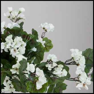 Geranium Hanging Vines, Outdoor Rated