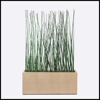 5'L Horsetail Grove in Modern Planter, Outdoor