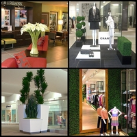 Indoor Plants, Trees, Topiaries & Hedges