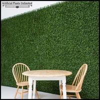 Indoor Japanese Boxwood Living Walls