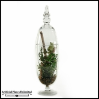 Jade Plant and Fern in Tall Glass Jar with Lid, 28 in.