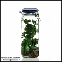 Jade Plant in Glass Jar with Lid, 11 in.