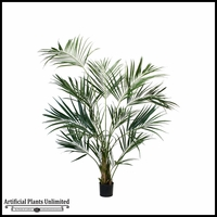 8' Kentia Palm