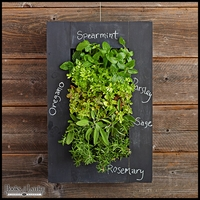 Living Wall Kit with Chalkboard Frame