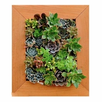Living Wall Planter with Succulents in Picture Frame Box