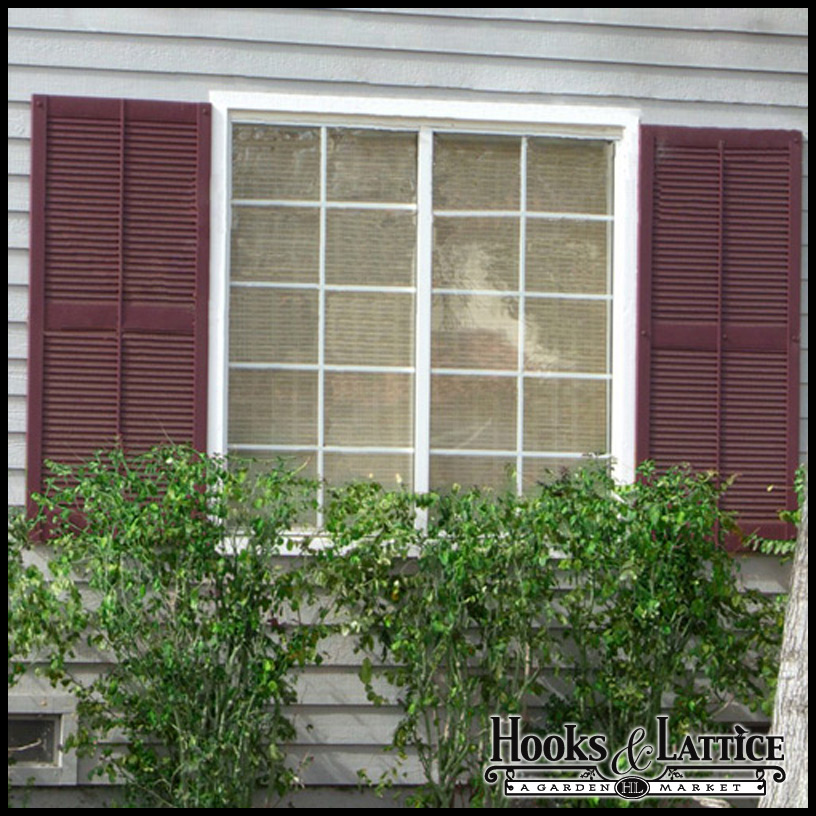 decorative shutters related keywords suggestions decorative