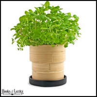 Mint Seed Kit in Bamboo Contanier