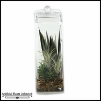 Mixed Agave and Tillandsia in Glass Jar with Lid, 18 in.