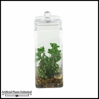 Mixed Sedum and Jade Plants in Glass Jar with Lid, 12 in.