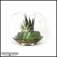 Mixed Succulents and Agave in Glass Bowl, 14 in.