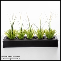 Onion Grass in Tray, 36 in.