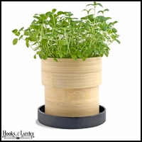 Oregano Seed Kit in Bamboo Container