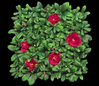 "Outdoor Artificial Red Flowering Azalea Mat- 12"" Squares"