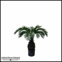 2.5' Pineapple Palm