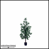 Podocarpus Tree (3 Sizes)