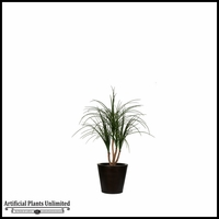 Potted Baby Ponytail Palm (2 Sizes)