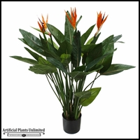 Potted Bird Of Paradise Plant 4'