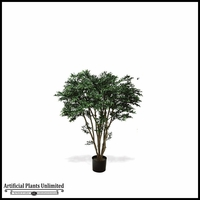 Potted Black Willow Tree (2 Sizes)