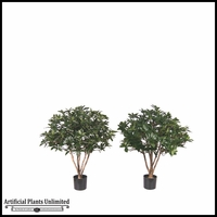 Potted Brazilian Pittosporum (2 Sizes, Colors)