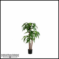 Potted Dracaena Fragrans Tree (2 Sizes)