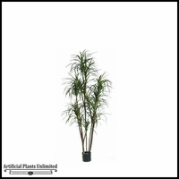 Potted Dracaena Marginata Tree 6'