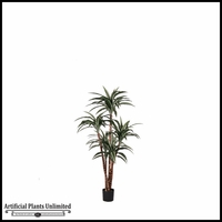 Potted Dracaena Warneckii Plant (2 Sizes)