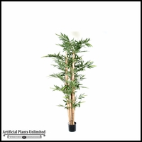 7', 8', 9' or 10' Potted Giant Bamboo Pole Tree