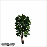 Potted Giant Schefflera Tree (3 Sizes)