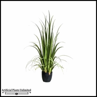 4', 5' or 6' Potted Gladiolus Grass