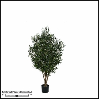 Potted Green Olive Tree w/ Olives 5'
