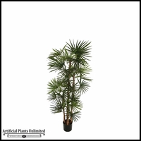 Potted Lady Finger Palm (5 Sizes)