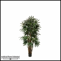 Potted Lady Palm (5 Sizes)