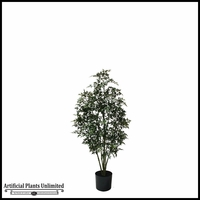 Potted Ming Aralia Tree 4'