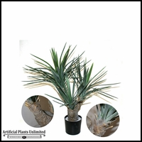 Potted Pineapple Yucca (2 Sizes)