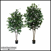 Potted River Oak Tree (2 Sizes)