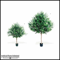 Potted Y-Shaped Olive Tree (2 Sizes)